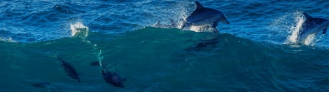 bluedolphins